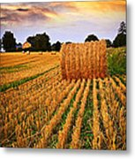 Golden Sunset Over Farm Field In Ontario Metal Print by Elena Elisseeva