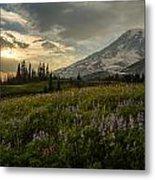 Golden Sunstar Rainier Meadows Metal Print