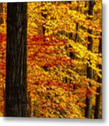 Golden Trees Glowing Metal Print