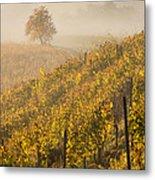 Golden Vineyard And Tree Metal Print