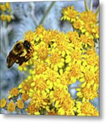 Golden Yarrow And Visitor Metal Print