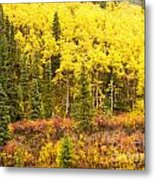 Golden Yellow Fall Boreal Forest In Yukon Canada Metal Print