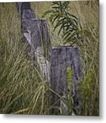 Goldenrod By The Fence Metal Print
