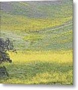 Goldenrod Oak Santa Ynez California 3 Metal Print