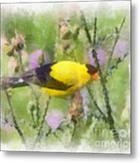 Goldfinch #3 By Kerri Farley Metal Print