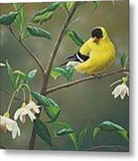 Goldfinch And Snowbells Metal Print by Peter Mathios