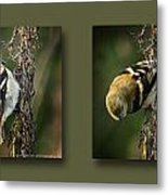Goldfinch Collage Metal Print