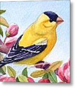 Goldfinch In A Crab Apple Tree Metal Print