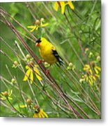 Goldfinch In The Flowers Metal Print