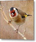 Goldfinch Male Carduelis Carduelis Metal Print