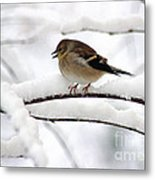 Goldfinch On Snowy Branches Metal Print