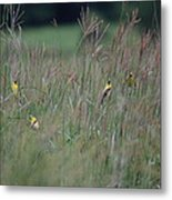 Goldfinch Party Metal Print