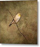 Goldfinch Portrait Metal Print