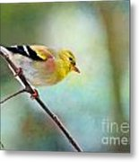 Goldfinch With Rosy Shoulder - Digital Paint IIi Metal Print