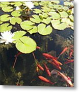 Goldfish And Water Lily 1 Metal Print