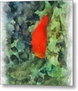 Goldfish Photo Art 04 Metal Print