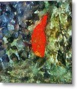 Goldfish Photo Art 05 Metal Print