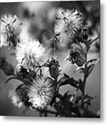 Gone To Seed Wild Aster Metal Print