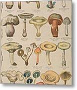 Good And Bad Mushrooms Metal Print