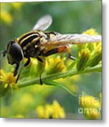 Good Guy Hoverfly  Metal Print