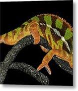 Good Night Chameleon Metal Print