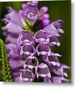 Obedient Plant Metal Print