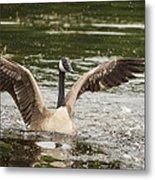 Goose Action Metal Print
