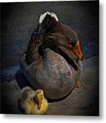 Goose And Gosling Metal Print