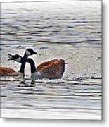 Goose Crossing Metal Print