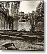 Goose In Central Park Nyc Metal Print