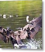 Goose Landing II Metal Print