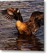 Goose Preparing For Flight Metal Print