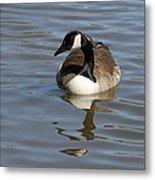 Goose Reflecting  Metal Print