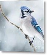 Gorgeous Blue Jay In The Snow Metal Print