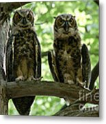 Gorgeous Great Horned Owls Metal Print
