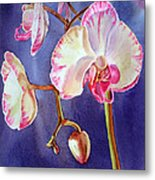 Gorgeous Orchid Metal Print