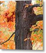 Gorgeous Tree Metal Print