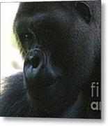 Gorilla-10 Metal Print