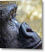 Gorilla Contemplating Metal Print