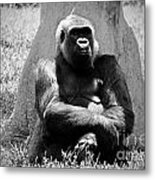 Gorilla In Solitude Metal Print