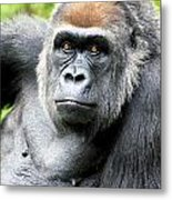 Gorilla Pose Metal Print