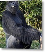 Gorillas In The Mist Metal Print