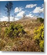 Gorse Bush On Mountain Approach Metal Print