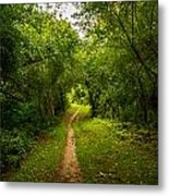 Gosnell Big Woods Trail Metal Print