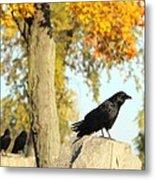 Three Ravens On A Gothic Graveyard Day Metal Print