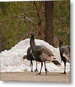 Gould's Wild Turkey Iv Metal Print