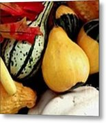 Gourd Group Of Fall's Bounty Metal Print