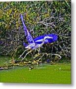 Gr8 Heron Flight Metal Print