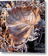 Graced By Frost Metal Print
