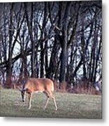 Graceful Deers Metal Print by Jose Lopez